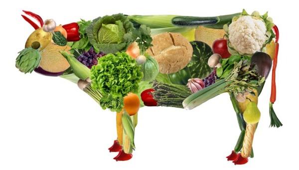 5-vegetariano-800x455