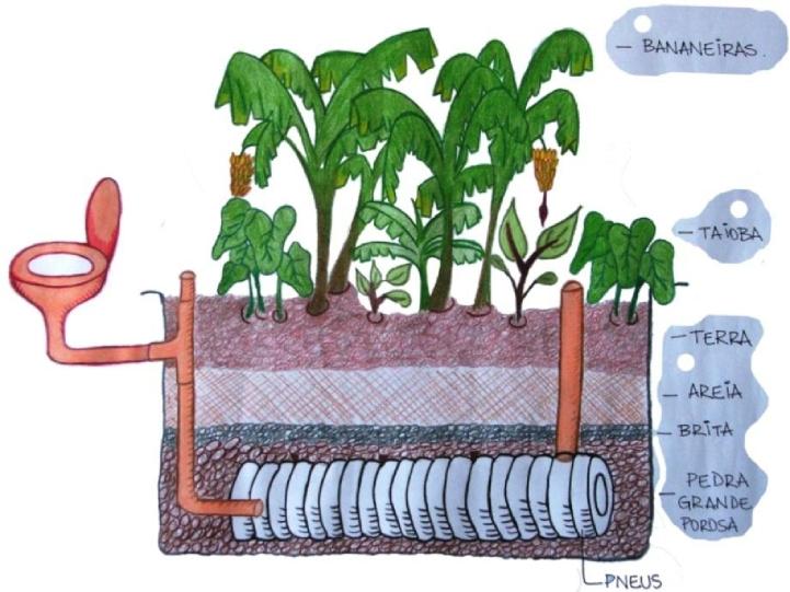 conheça 6 iniciativas de saneamento-fossa de bananeira